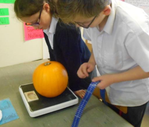 weigh your pumpkins